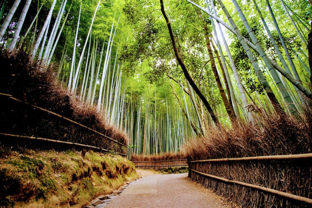 Japan Photography Tour