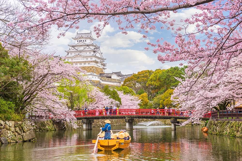 The Ultimate Guide For Cherry Blossom Season In Japan Asahi